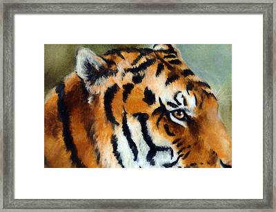 Eye Of The Tiger Framed Print by Ronald Bolokofsky