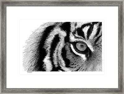 Eye Of The Tiger Framed Print by Scott Woyak