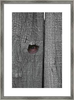 Eye On Life Framed Print by Douglas Barnett