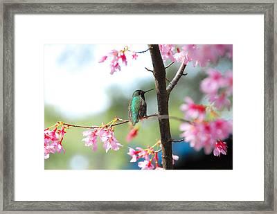 Eye On Spring Framed Print by Lynn Bauer