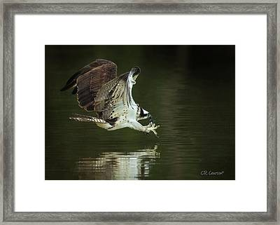 Eye On The Prize Framed Print by CR Courson