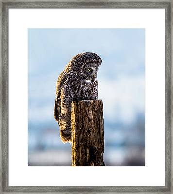 Eye On The Prize - Great Gray Owl Framed Print