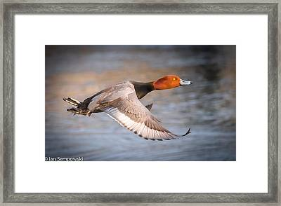 Eye On The Prize Framed Print