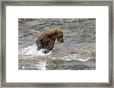 Framed Print featuring the photograph Eye On The Sockeye by Cheryl Strahl