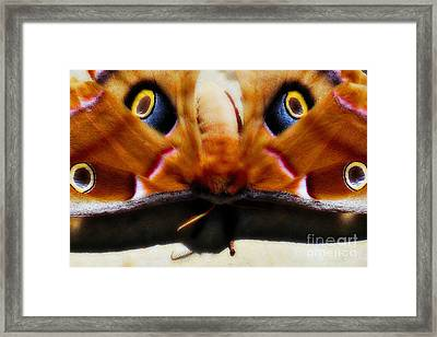 Eye On You Framed Print by Anita Faye