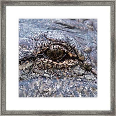 Eye On You Framed Print by Jurgen Lorenzen