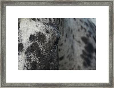 Framed Print featuring the photograph Eye See Spots by Lynda Dawson-Youngclaus