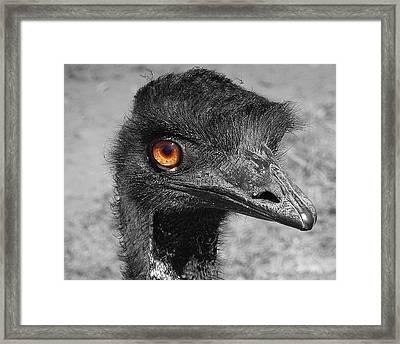 Eye See You Framed Print by Karen Cook