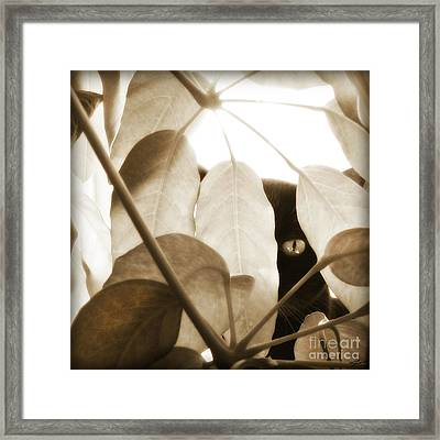 Eye Spy Framed Print by Shevon Johnson