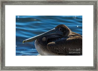 Eye To Eye Framed Print by Marvin Spates