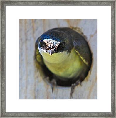 Eye To Eye Framed Print by Robert Pearson