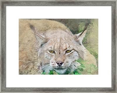 Eye To Eye With A Lynx In The Grass Framed Print by Elaine Plesser