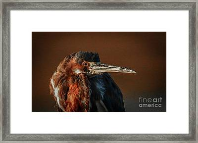 Eye To Eye With Heron Framed Print