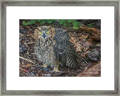 Eye To Eye With Owl Framed Print