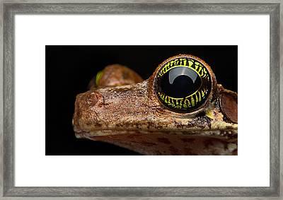 Eye Tropical Tree Frog Framed Print