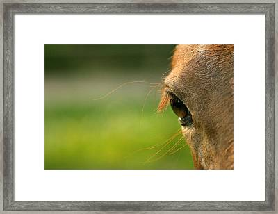 Eye Whiskers Framed Print by Angela Rath