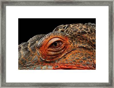 Eyeball Of Dragon Head Framed Print