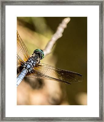 Eyeball View Of Green Eyed Dragonfly Framed Print by Douglas Barnett