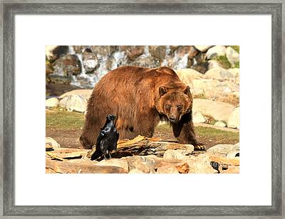 Eyeing Each Other Framed Print by Adam Jewell