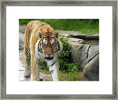 Eyeing Me Up Framed Print by Gordon Dean II