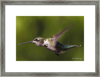 Eyelashes Hummingbird Framed Print