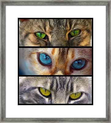 Eyes 1 Framed Print
