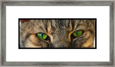 Eyes 1a Framed Print