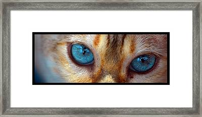 Eyes 1b Framed Print
