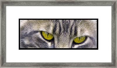 Eyes 1c Framed Print