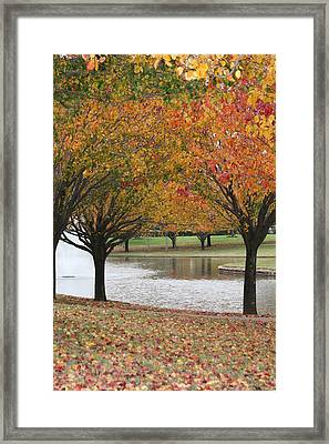 Eye's Delight Framed Print by David Wahome