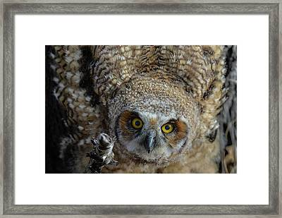 Eyes Into The Soul Framed Print