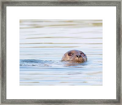 Framed Print featuring the photograph Eyes Of Doubt by Debbie Stahre