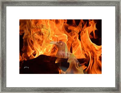 Eyes Of Fire Framed Print