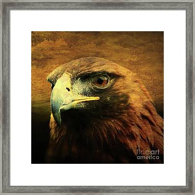 Eyes Of The Golden Hawk . Square Framed Print by Wingsdomain Art and Photography
