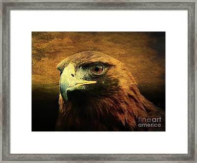 Eyes Of The Golden Hawk Framed Print by Wingsdomain Art and Photography