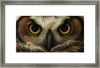 Eyes Of The Great Horned Owl Framed Print by Brian Gustafson