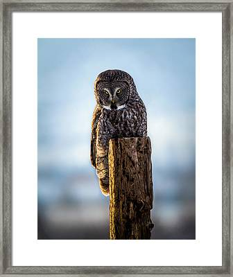 Eyes Of The Preditor Framed Print by TL Mair