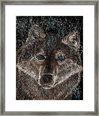 Eyes Of The Snow Wolf Framed Print by Nick Gustafson