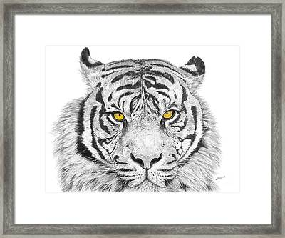 Eyes Of The Tiger Framed Print by Shawn Stallings