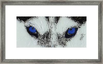 Eyes Of The Wild Framed Print