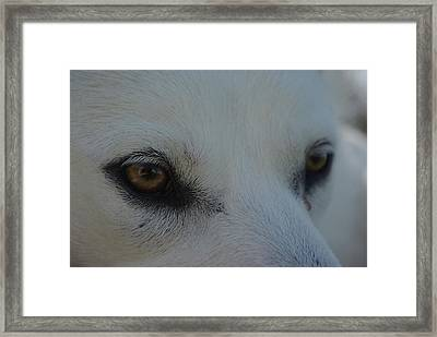 Eyes Of The Wolf - In Her Eyes Framed Print by Robyn Stacey