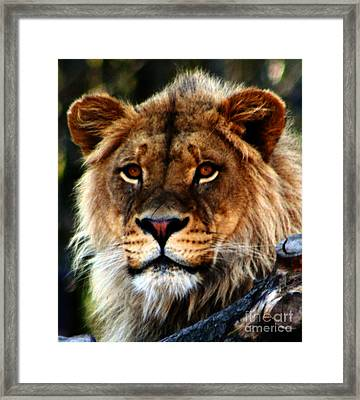 Eyes Of The Young King Framed Print by Nick Gustafson