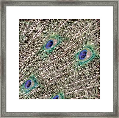Eyes On A Branch Framed Print by Tish Hopkins