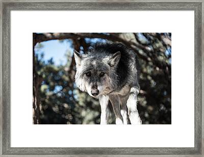 Eyes On The Prize Framed Print