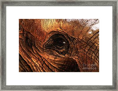 Eyes Through The Canyon Of Time Framed Print by Wingsdomain Art and Photography