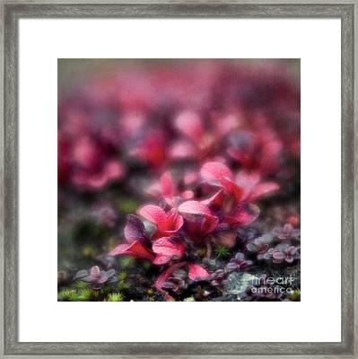 Bearberry Leaves Framed Print