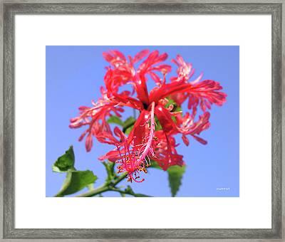 F18 Hawaiian Hibiscus Framed Print by Donald k Hall