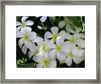 F2 Plumeria Frangipani Flowers Hawaii Framed Print by Donald k Hall
