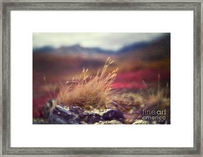 Autumn Grass Framed Print