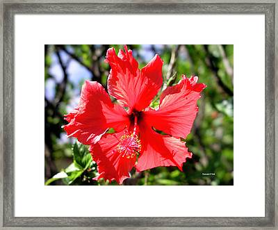 F20 Red Hibiscus Framed Print by Donald k Hall